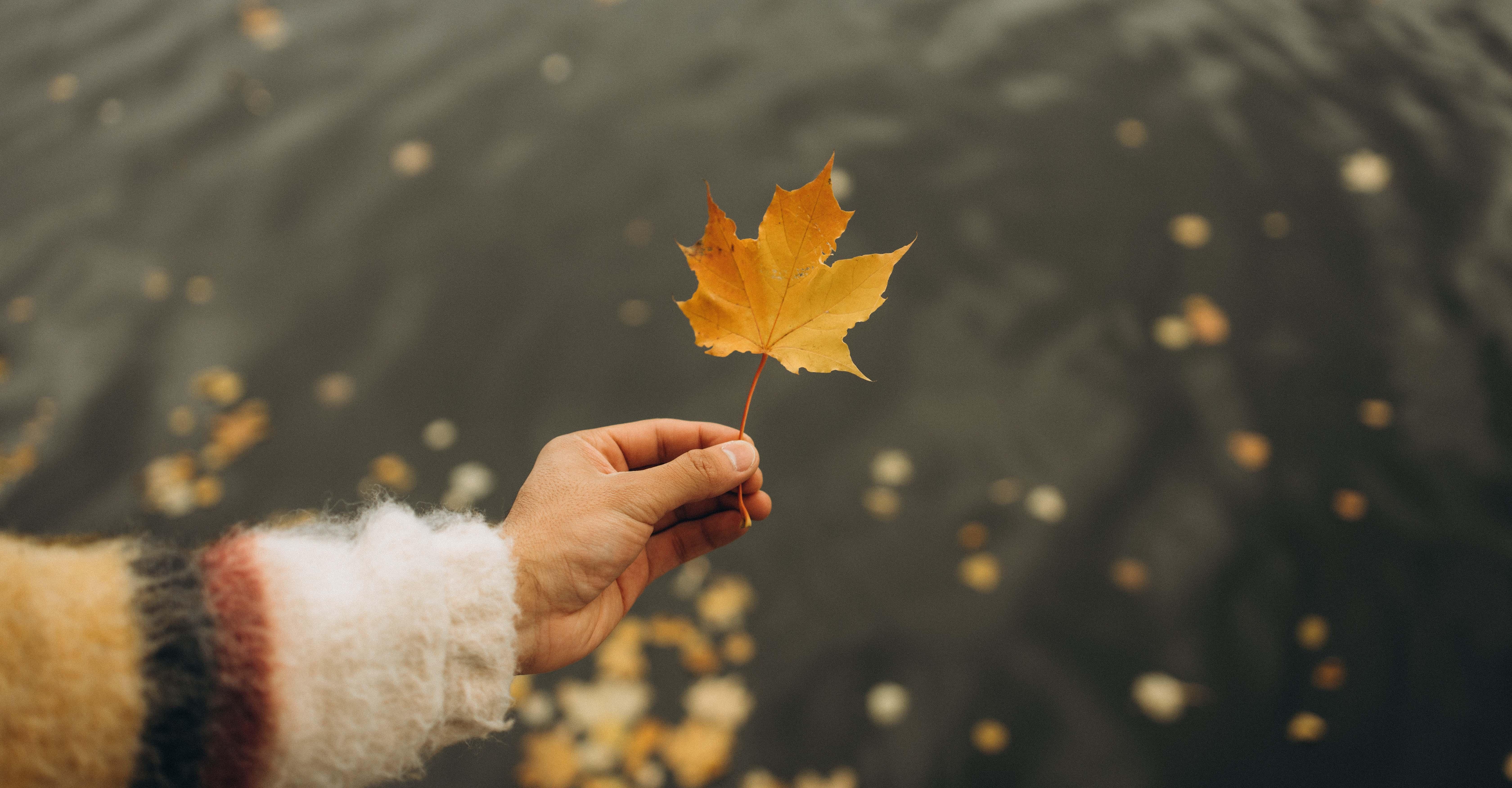 Fall Leaf Cozy Sweater Winter Water