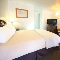 Oceanic accommodations are filled with carefully considered amenities for your comfort and convenience.