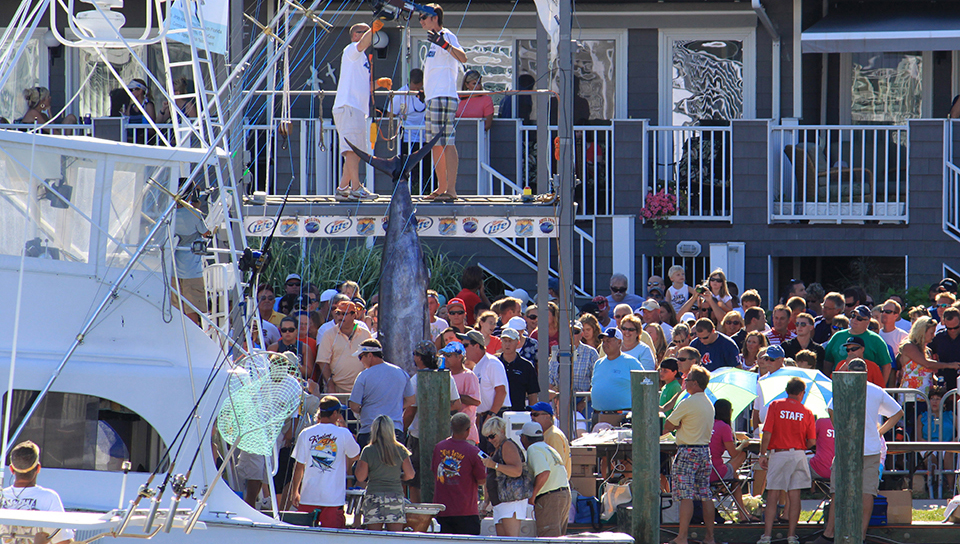 The White Marlin is an amazing fish.