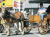 Horse and Carriage Rides in Ocean City, MD