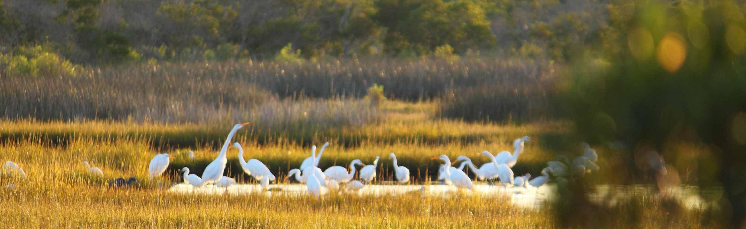 wild birds of assateague island national park